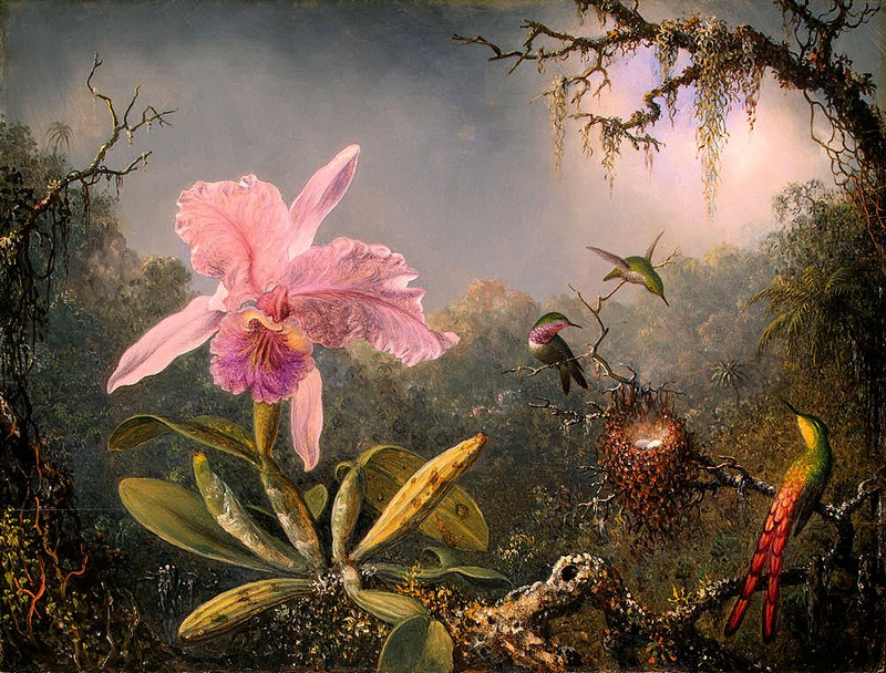 http://www.bjl-multimedia.fr/real_tv/Martin-Johnson-Heade_oiseaux-tropicaux.jpg